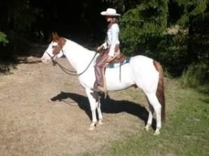 Paint horse gelding standing in Western gear