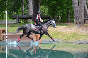 Warmblood trotting in water jump