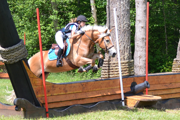 Haflinger jumping cross-country