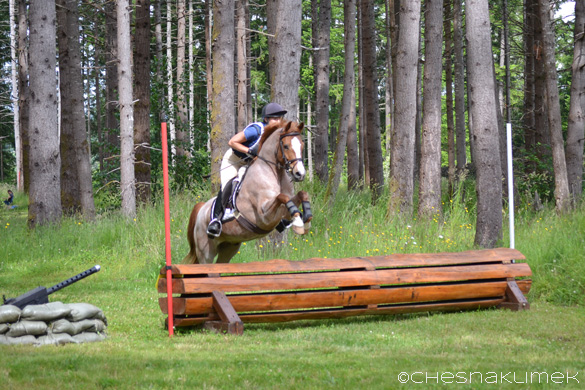 Red roan pony jumping cross-country