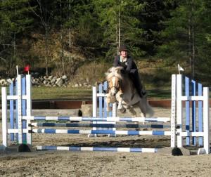Haflinger horse jumping