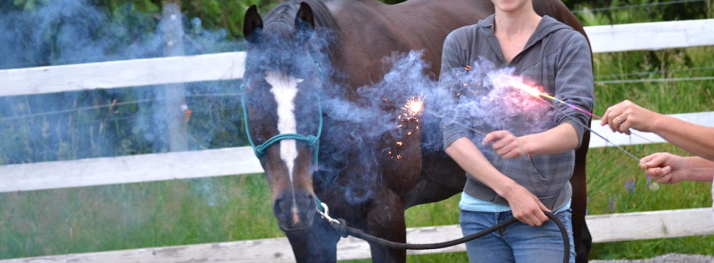 Horse standing safely by sparklers