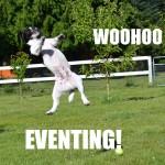 Dog jumping high meme
