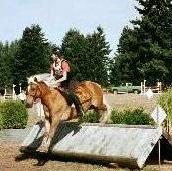 Haflinger jumping cross-country