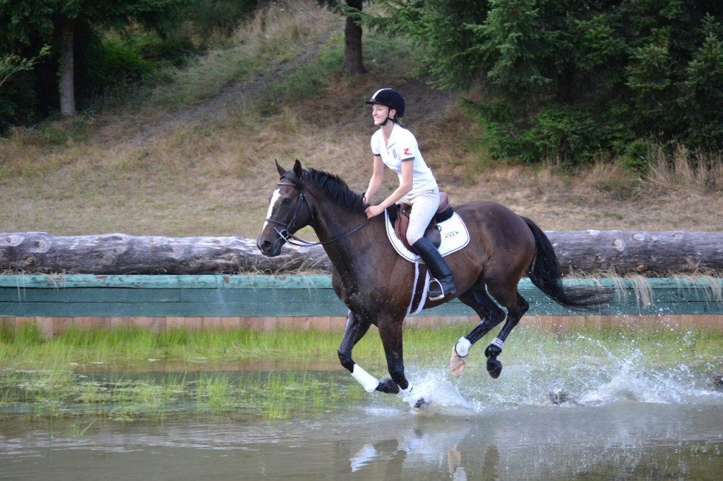Bay horse cantering through water jump