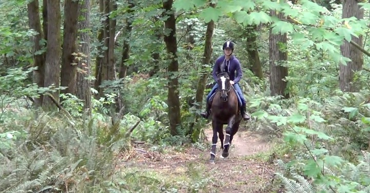 Horse cantering in the woods