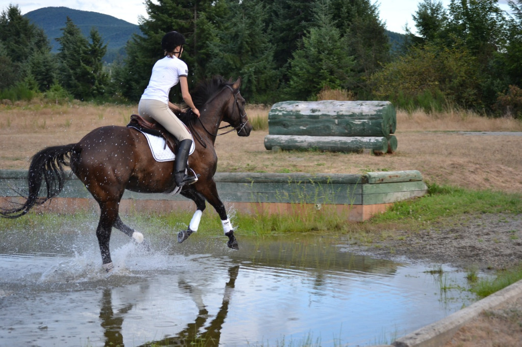 Horse cantering through water