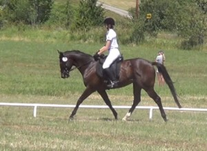 Trotting dressage horse