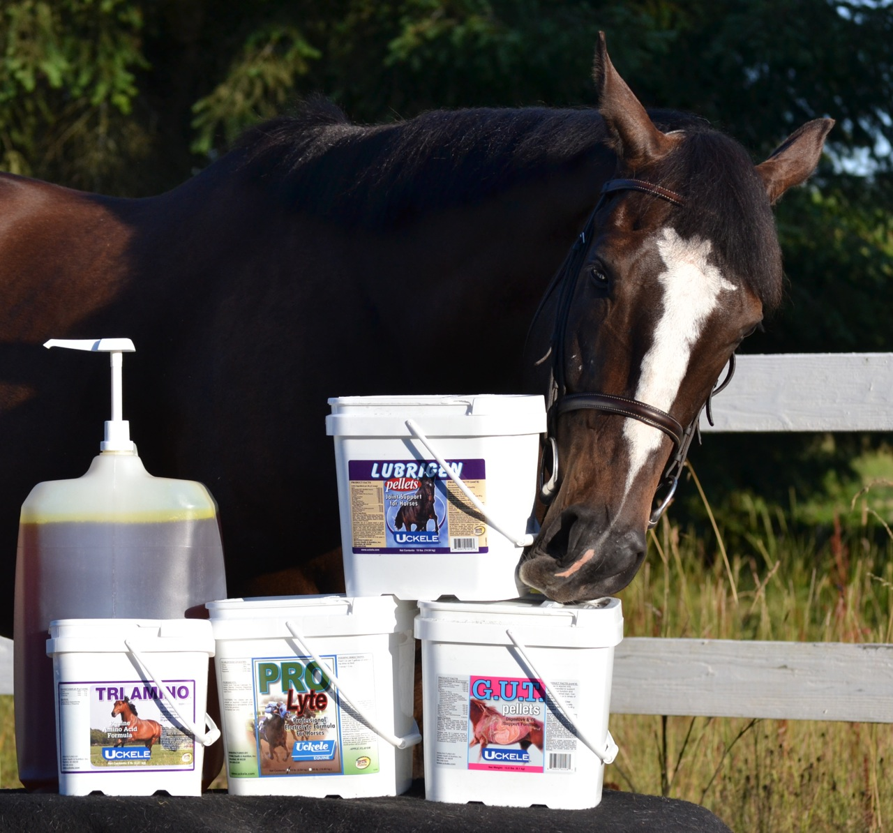 Horse nuzzling Uckele supplements