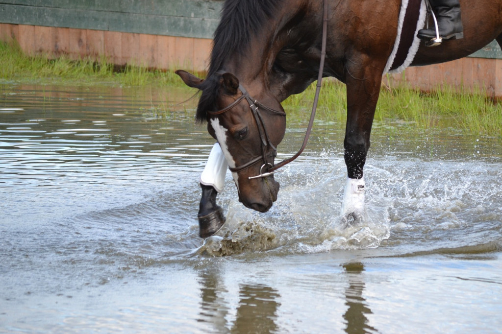 Solar pawing the water with his hoof