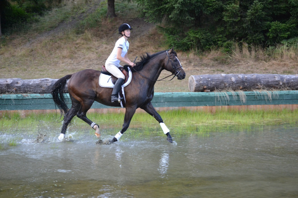 Horse trotting in water