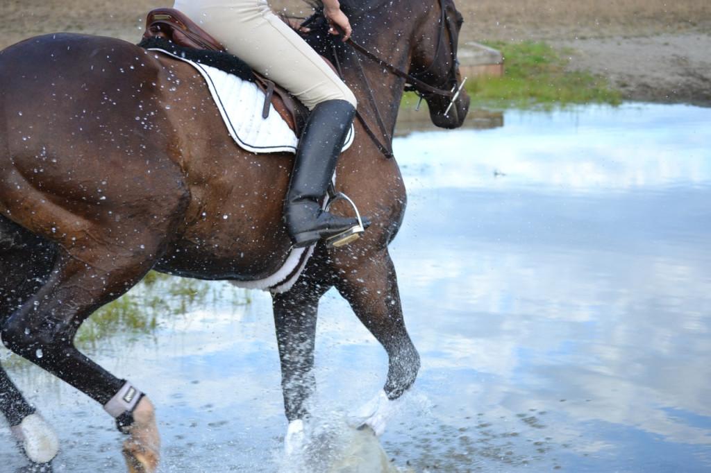 Horse splashing through water jump