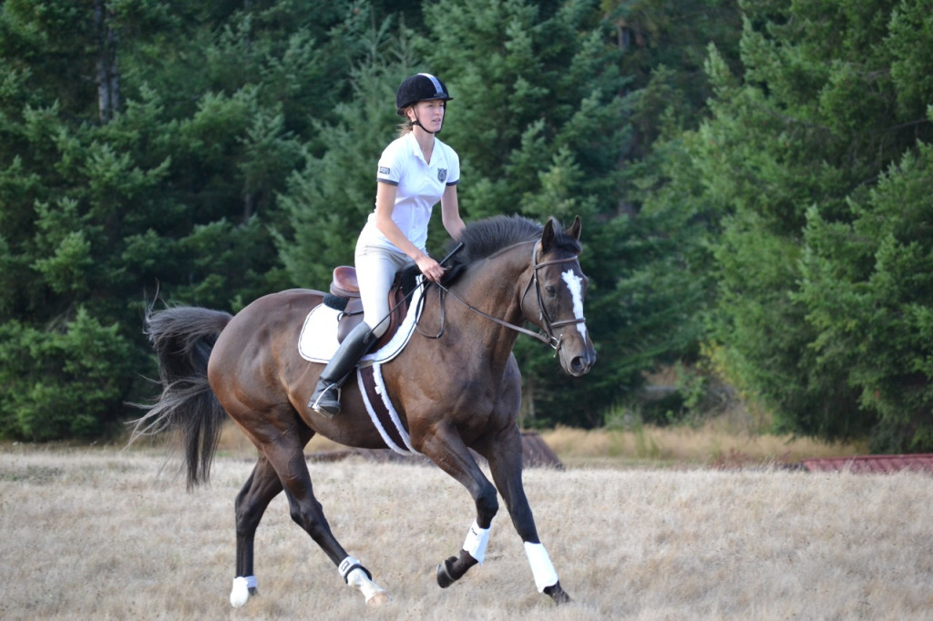 Thoroughbred horse cantering