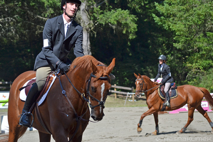 Two chestnut horses entering the arena