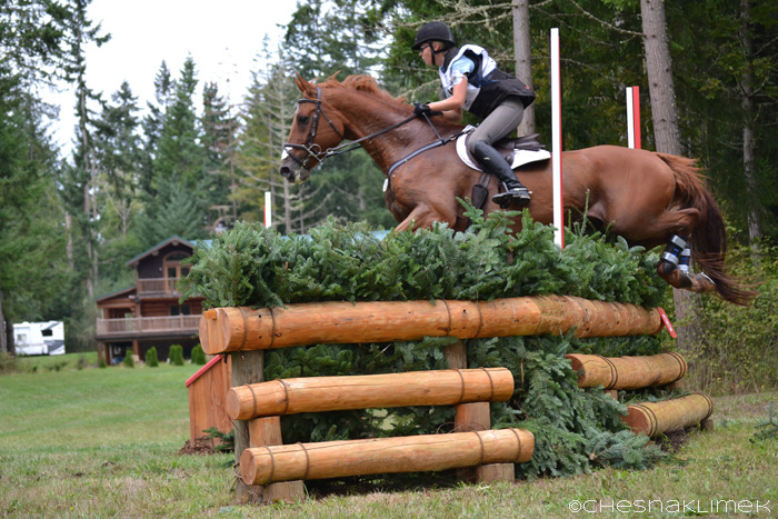 Horse jumping Intermedia brush cross-country fence