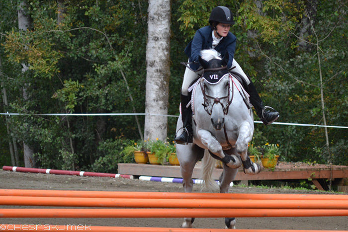 Grey horse show jumping Intermediate level