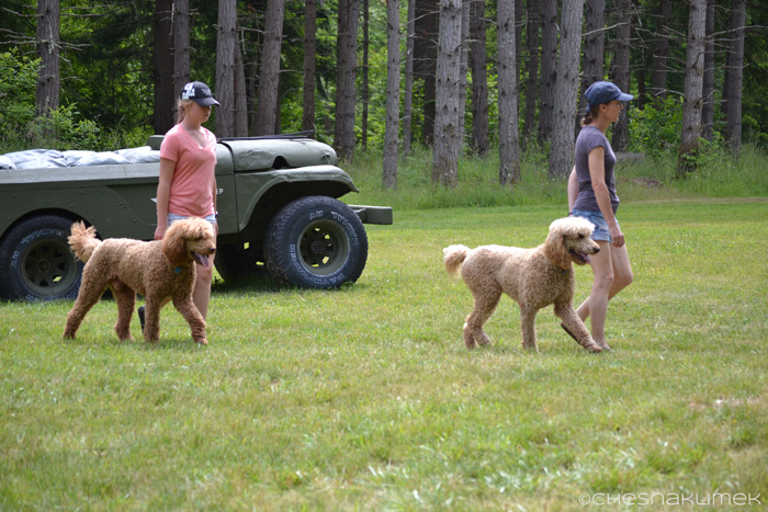 Two matching dogs and their female handlers