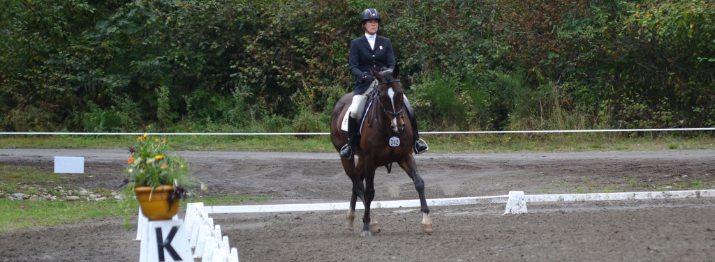 preliminary-level-dressage