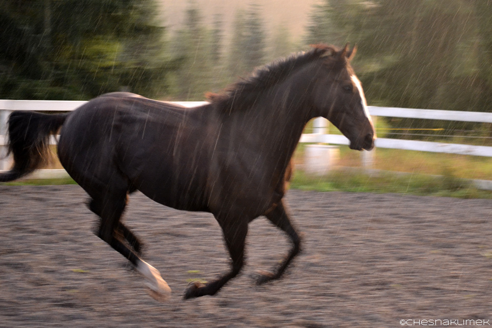 Solar cantering in the rain