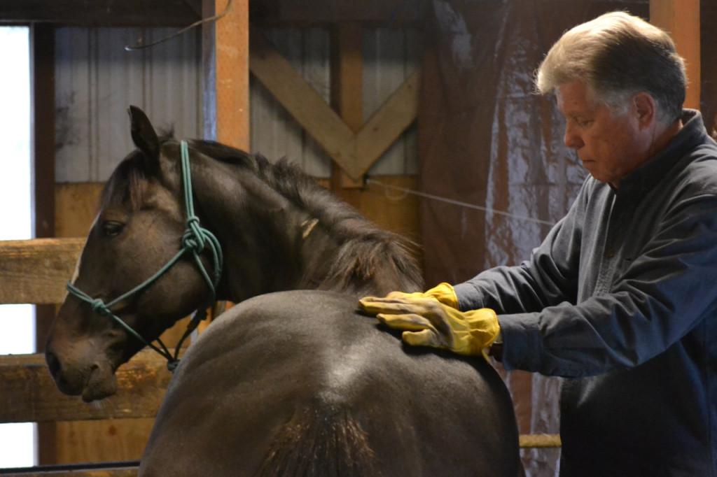 Solar receiving an equine massage