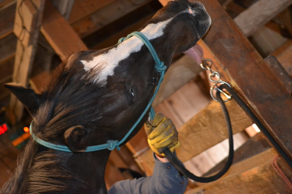 Solar enjoying his equine massage