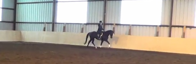 Solar trotting in an indoor arena