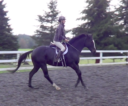Solar cantering without a bridle