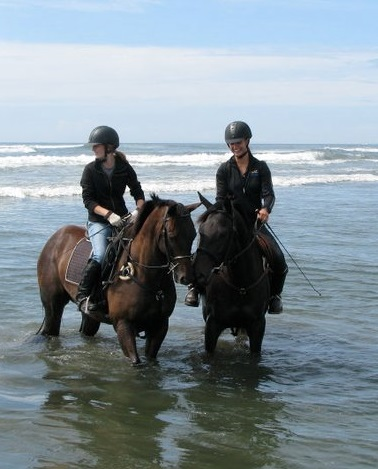 Two Thoroughbreds in the ocean