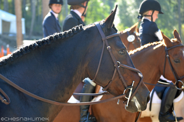 Ponies lined up for eventing awards