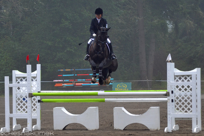 Preliminary level show jumping course