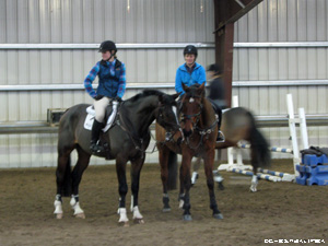 Horses touching noses during a clinic