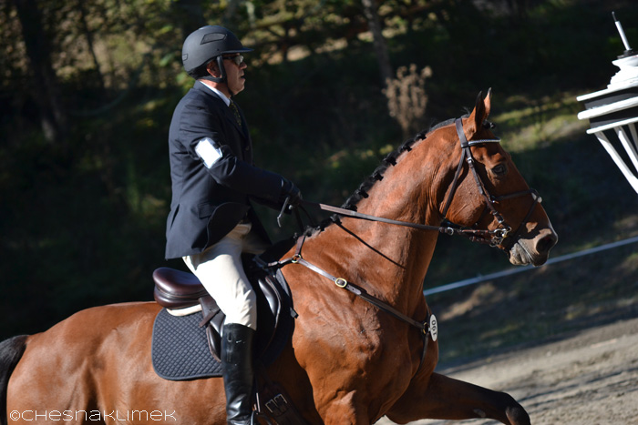 Cantering horse and rider