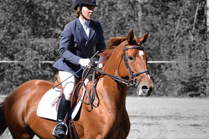 Female rider and horse cantering in the show ring