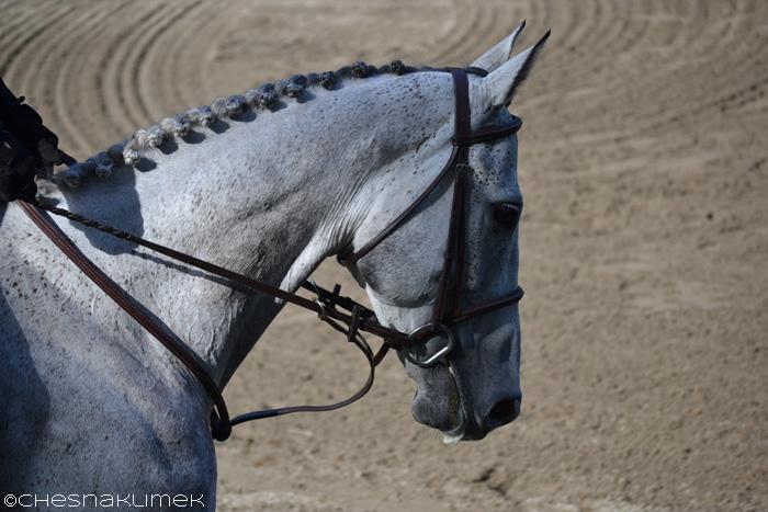 Close up of braided horse mane