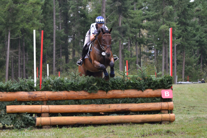 Cross-country horse jumping a Preliminary brush fence