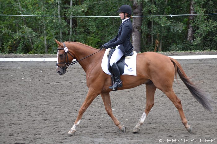 Preliminary dressage horse