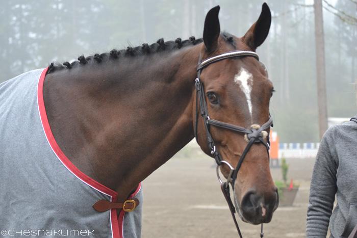 Headshot of winning horse, Fleur de Lis