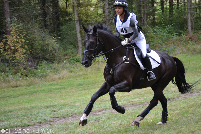 Black horse galloping on preliminary cross-country