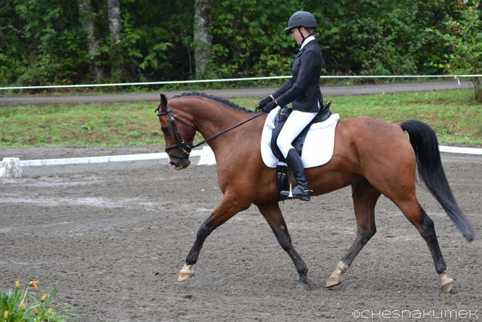 Bay horse performing medium trot in dressage