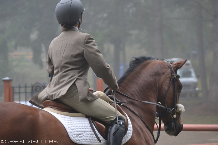 Close-up of show jumping horse and rider