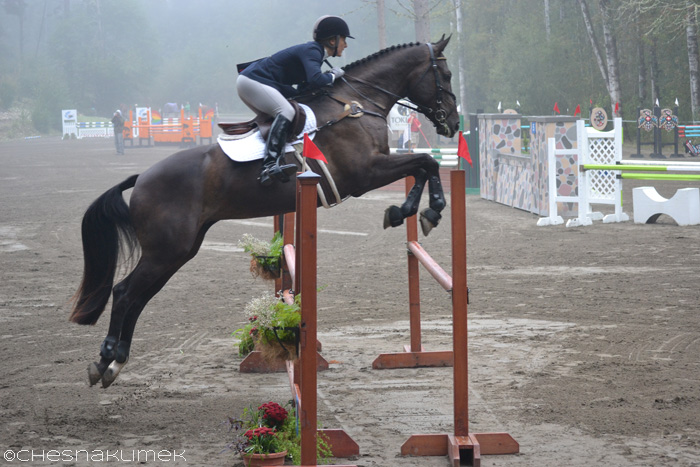 Preliminary show jumping horse