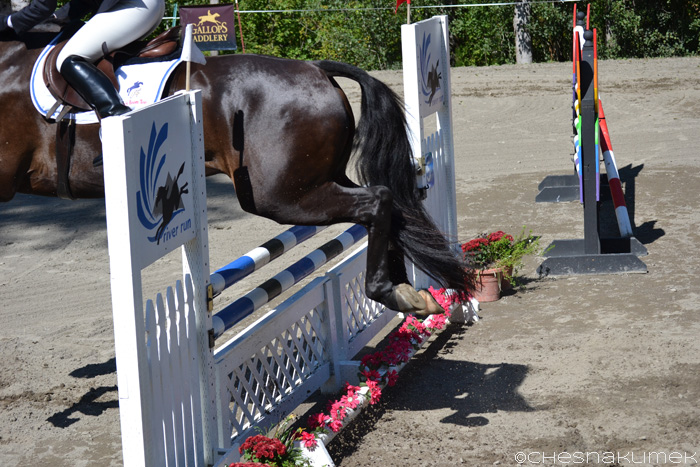 Horse clearing a jump with their hindlegs