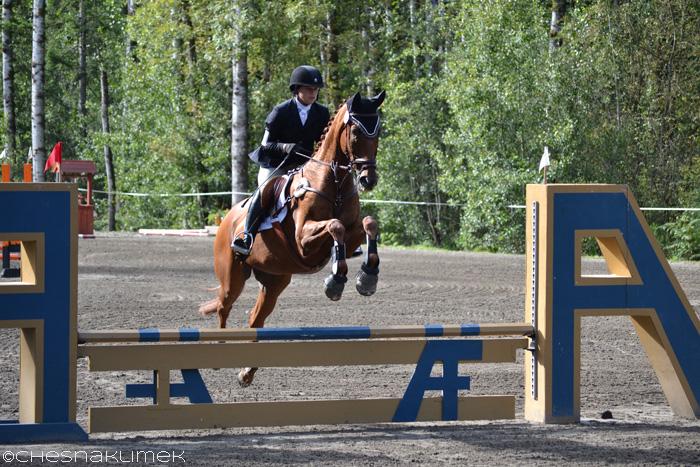 Beginner novice level horse jumping