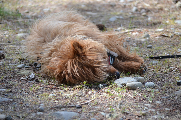 Brown scruffy dog sleeping on the ground