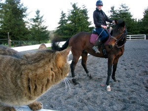 Cat watching a horse get ridden