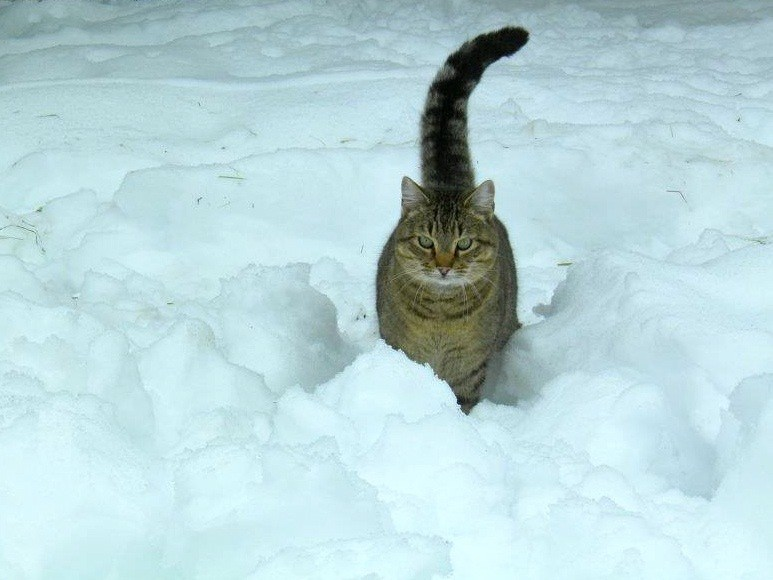 Kitty in deep snow