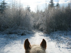 Horse looking at snowy path