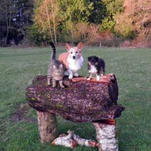 Cat standing with two dogs