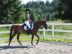 Brown horse being ridden by a dressage rider