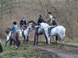 Foxhunting in a group of horses